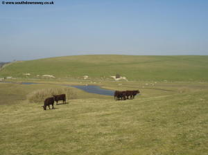 The Cuckmere River